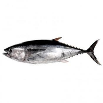 Atún - Pescadería Salgado