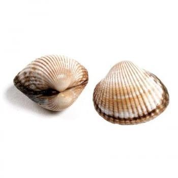 Almejas - Pescadería Salgado