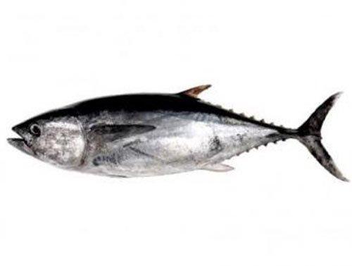 Beneficios del atún - Felipe Salgado