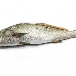 pez 18